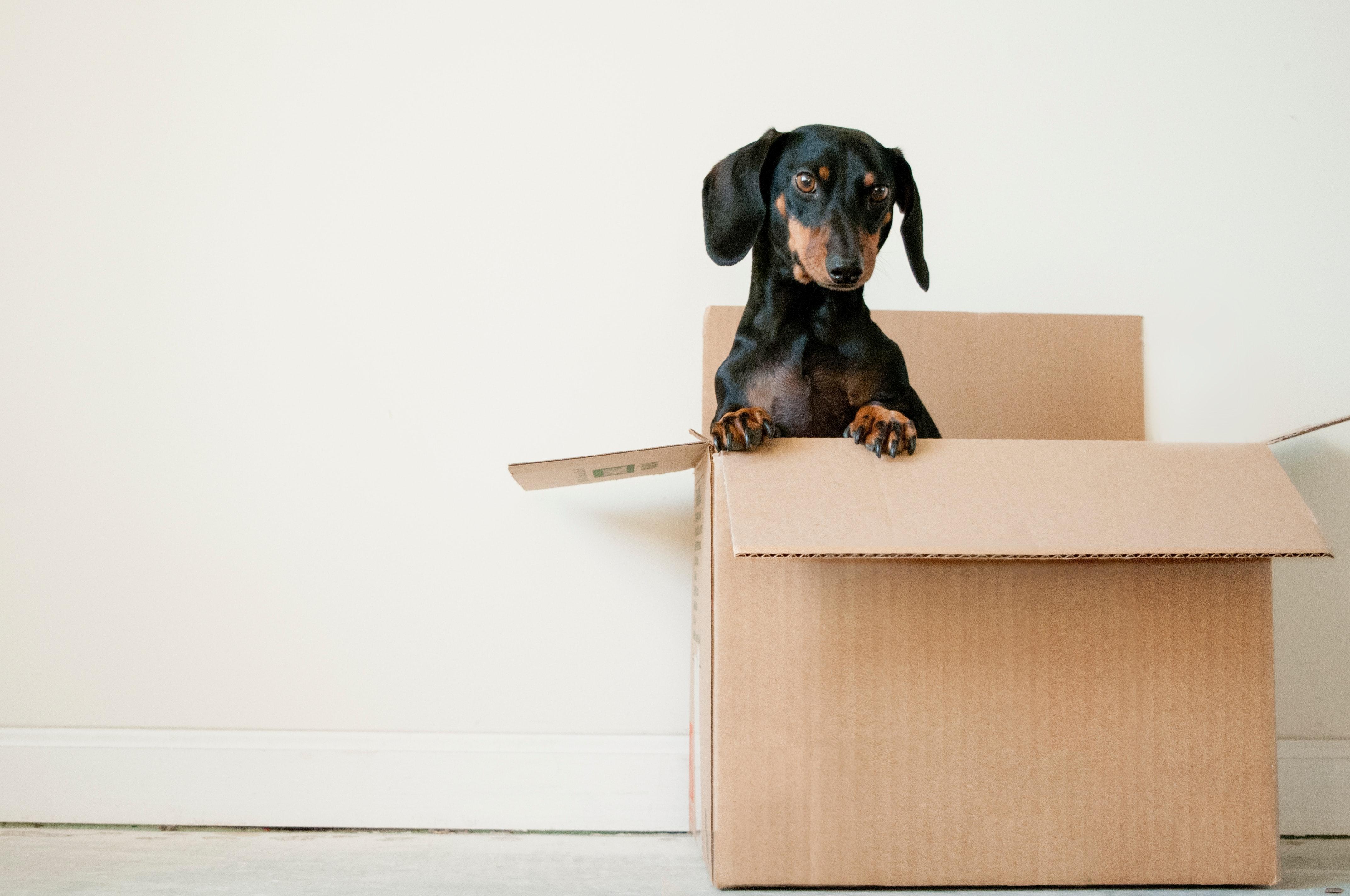 dog sitting inside moving box